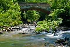 A bridge in the forest Royalty Free Stock Photo