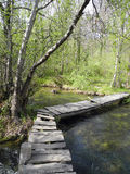 Bridge through the forest river. On a sunny day Stock Photos