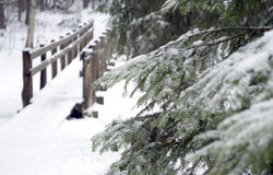 Bridge in forest of winter Stock Photography