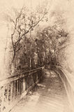 Bridge in a forest Royalty Free Stock Images