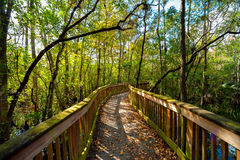 Bridge in a forest. Wooden bridge in a forest, Kirby Storter Roadside Park, Ochopee, Collier County, Florida, USA royalty free stock image