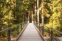 Bridge in Forrest royalty free stock photo