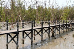 Bridge go to the mangrove forest Royalty Free Stock Image