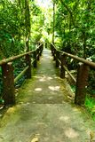 The bridge goes into the forest. The bridge goes into the forest to go to Haew Narok waterfall Stock Image