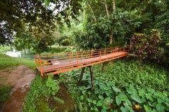 The bridge and Green caladium elephant ear plant. Green caladium elephant ear plant in Marsh stock image