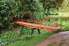 The bridge and Green caladium elephant ear plant. Green caladium elephant ear plant in Marsh royalty free stock photography