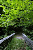 Bridge in green forest Royalty Free Stock Photos