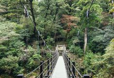 Bridge hanging Forest Trekking trail adventure Nature Landscape Stock Photos