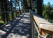 Bridge hanging from trees royalty free stock photo