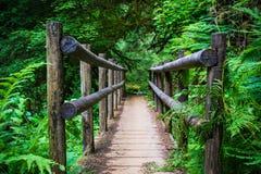 Bridge on hiking trail stock image