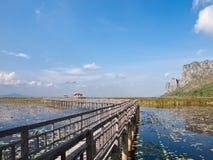 Bridge In The Swamp Lotus. Royalty Free Stock Photography