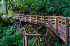 Bridge inside of dense temperate rainforest with fern trees in south island, in New Zealand.  Stock Image