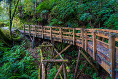 Bridge inside of dense temperate rainforest with fern trees in south island, in New Zealand.  Royalty Free Stock Photos
