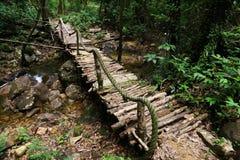 Bridge inside tropical jungle Royalty Free Stock Images