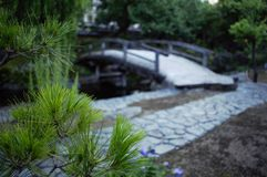 Bridge in a Japanese garden royalty free stock image
