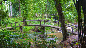 Bridge in Jungle Forest. Royalty Free Stock Photo