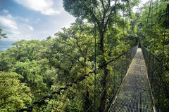Bridge in the jungle. Suspension bridge in the jungle stock photos