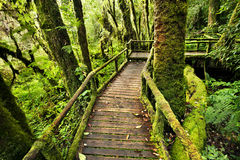 Bridge in the jungle royalty free stock photography