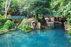 Bridge in jungle Stock Photography