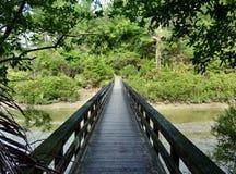 Bridge leading into a forest. Bridge leading over the Okura River into the Okura Bush Scenic reserve near Auckland Stock Photo