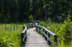 A bridge leading into the forest Stock Images