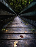 Bridge Leading into the thick Forest Stock Images