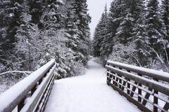 Bridge leading to a trail through Alaska wilderness Royalty Free Stock Photos