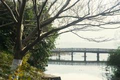 Bridge and leafless tree on West Lake Royalty Free Stock Image