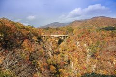 Bridge with leaves turning color in autumn in Naruko Gorge - Osaki, Miyagi, Japan royalty free stock images