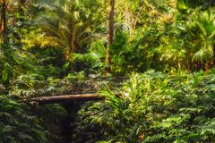 The bridge in the lush forest. Panorama view Royalty Free Stock Images