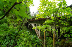 Bridge and Lush Vegetation Stock Photo