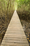 Bridge  into mangrove 1. Stock Photos