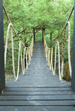 Bridge in mangrove conservation center. Wooden bridge in mangrove conservation center in Thailand Royalty Free Stock Image