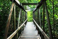 The bridge in mangrove Stock Images