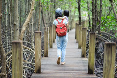 Bridge on mangrove forest Royalty Free Stock Photography