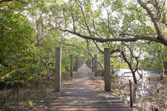 Bridge in mangrove forest. Perspective of bridge in mangrove forest Stock Images