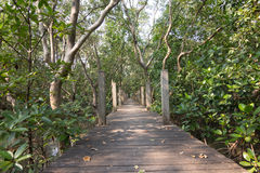 Bridge in mangrove forest. At Thailand , Prachineburi province Royalty Free Stock Photo