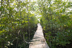 Bridge in mangrove forest. At Thailand , Prachineburi province Stock Photos