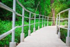 Bridge, in mangrove forest for Walking on sunshine stock images