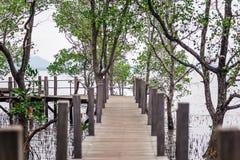 Bridge on mangrove forest Royalty Free Stock Image