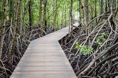 Bridge on mangrove forest Stock Photos
