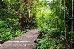 Bridge through the mangrove reforestation Royalty Free Stock Photos