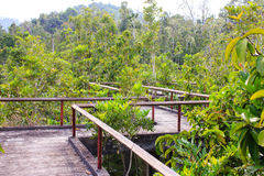 Bridge through the mangrove reforestation Royalty Free Stock Images