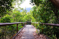 Bridge through the mangrove reforestation Stock Photos