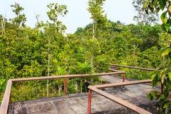 Bridge through the mangrove reforestation Royalty Free Stock Images