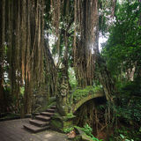 Bridge in monkey forest Ubud, Bali Royalty Free Stock Photography
