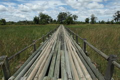 Solid wooden bridge in Africa. Long bridge over swampy area in Okavango Delta Stock Images