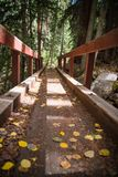 A bridge in the mountains and fall foliage near Aspen, Colorado. A bridge covered by leaves in the mountains and fall foliage near Aspen, Colorado during autumn royalty free stock photos