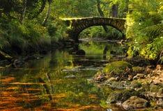 Bridge in the nature Stock Image