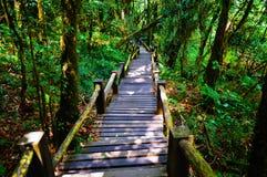 Bridge nature Stock Photography